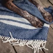 blue herringbone with dog