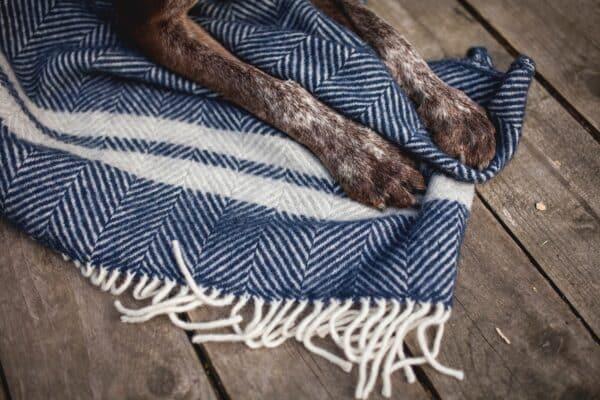 blue fishbone with dog